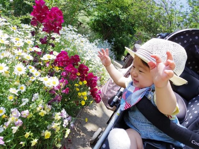 赤ちゃんが花を見て喜ぶ